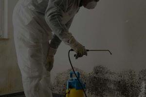 24/7 mold damage repair