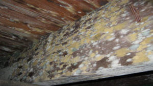 mold infiltrates wet environments