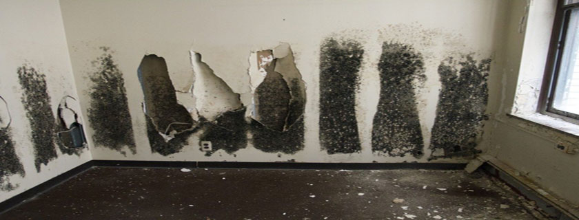 mold destroys home interior
