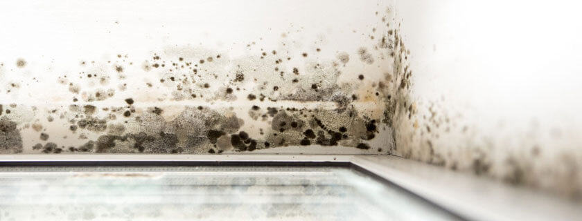 home flooding causes mold growth