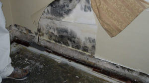 home mold can be dangerous