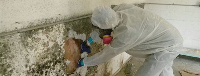mold growth remediation