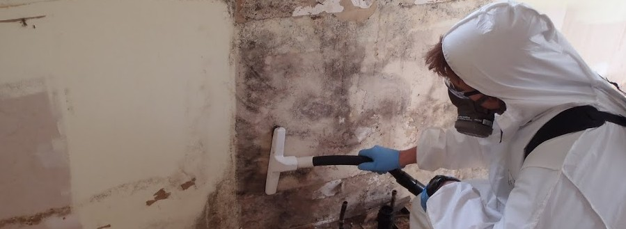 How Long Does It Take For Mold Damage To Grow? | Fix Mold ...
