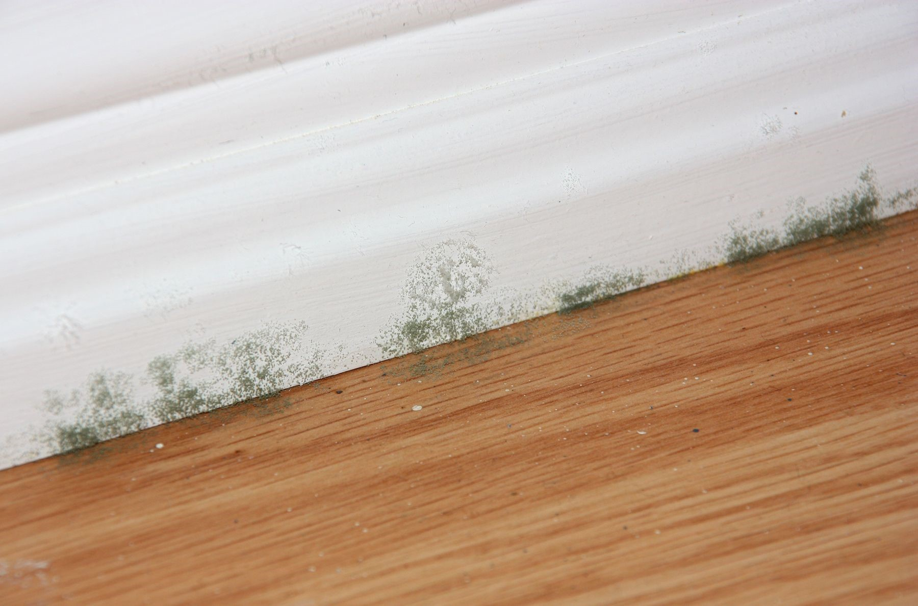 Signs Of Mold Under Hardwood Floors Pertaining To Heed The Warning